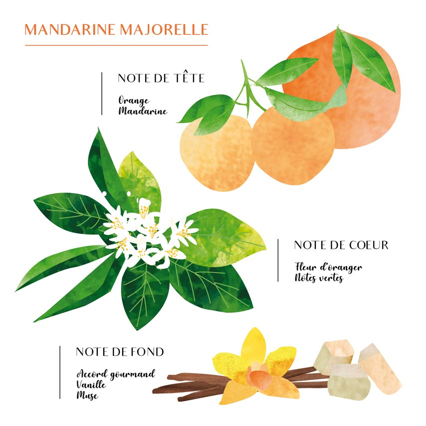 Pyramide olfactive Mandarine Majorelle